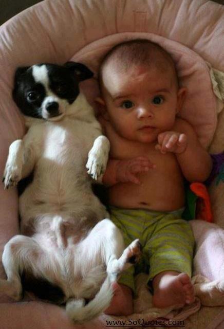 babies-need-pets-9
