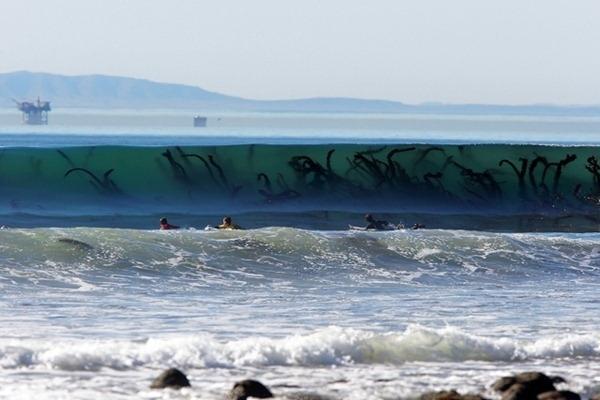 Monstro Marinho ? Não. Isso são apenas algas que apareceram numa foto de ondas de Montana
