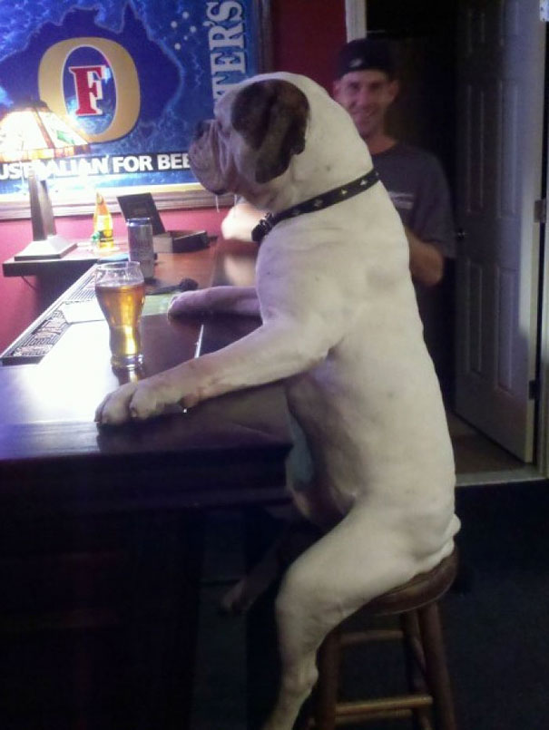 funny-animals-doing-human-things-16