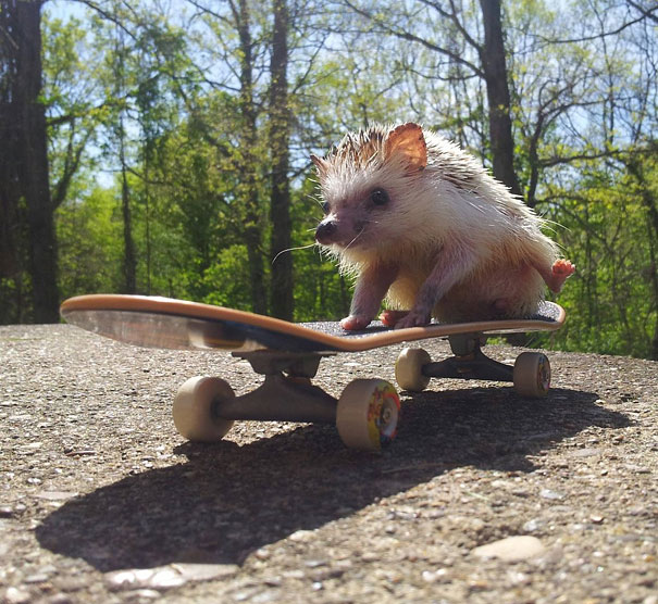 funny-animals-doing-human-things-7