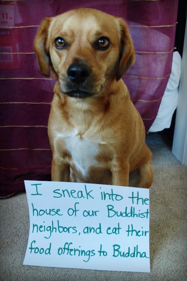 """""""Eu entrei na casa de nossos vizinhos budistas, e comi as suas oferendas de comida para Buda."""""""
