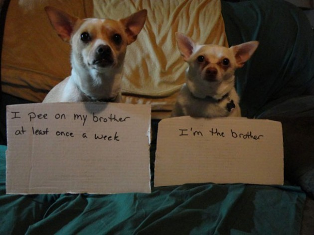 """""""Eu faço xixi no meu irmão pelo menos uma vez por semana.""""  """" - Eu sou o irmão."""""""