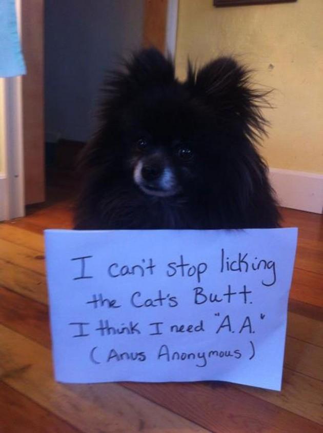 """""""Eu não consigo parar de lamber a bunda do gato. Eu acho que preciso do 'A.A' (Ânus Anônimos)."""""""