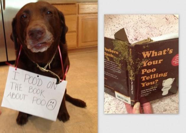 """""""Eu fiz cocô num livro sobre cocô."""""""