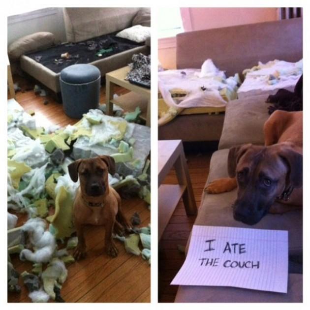 """""""Eu comi o sofá."""""""