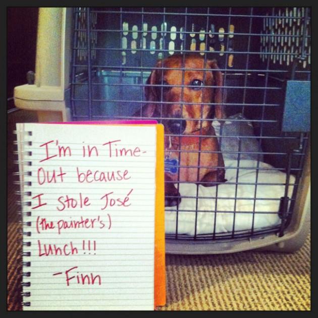 """""""Eu estou de castigo porque roubei o almoço do José (o pintor)!"""" – Finn"""