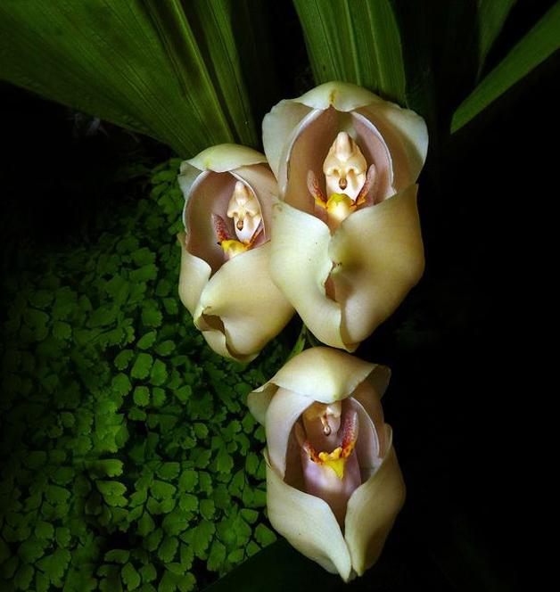flores7