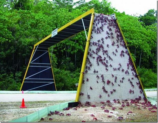 Passagem para caranguejos na Austrália