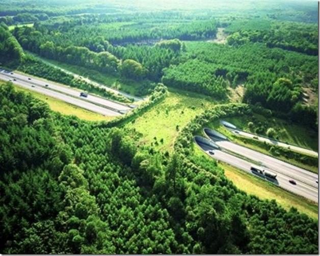 Highway A50, Holanda