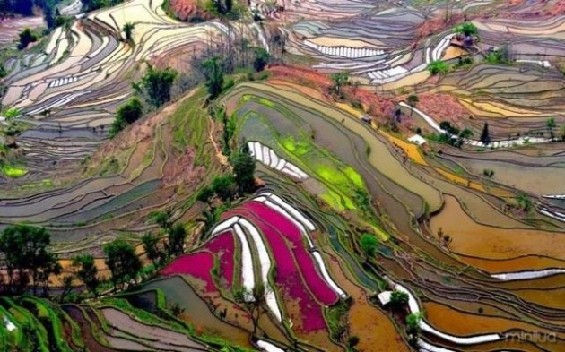 #6 - Campos de arroz na China
