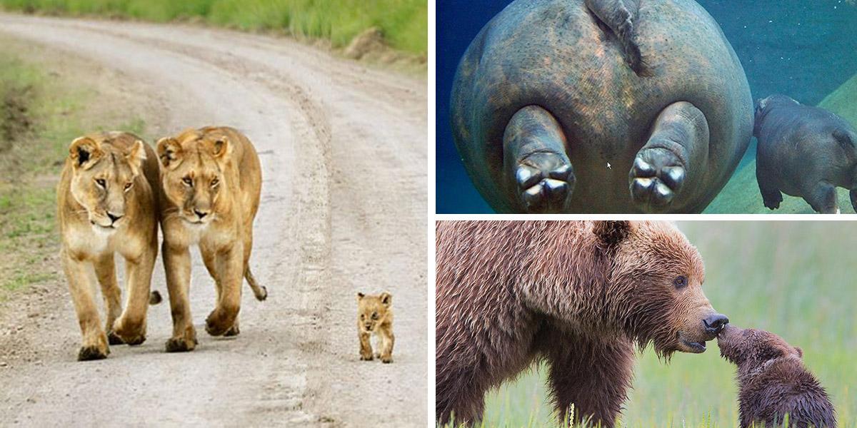 25 Lindas imagens de Animais com seus filhotes. Nos apaixonamos por todos!