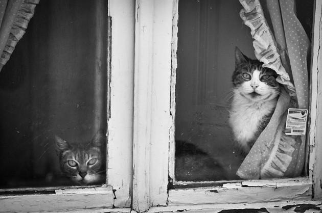 cat-waiting-window-14