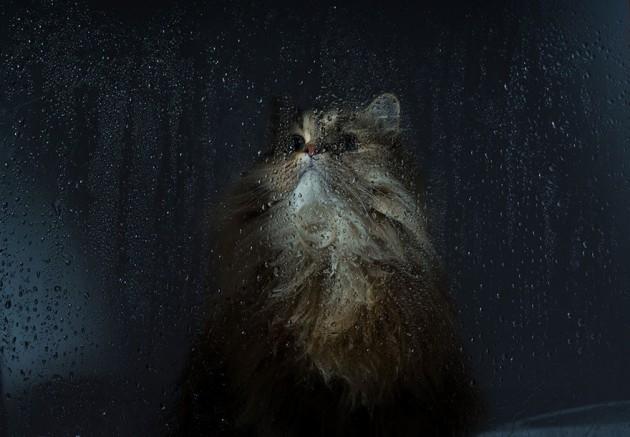 cat-waiting-window-33