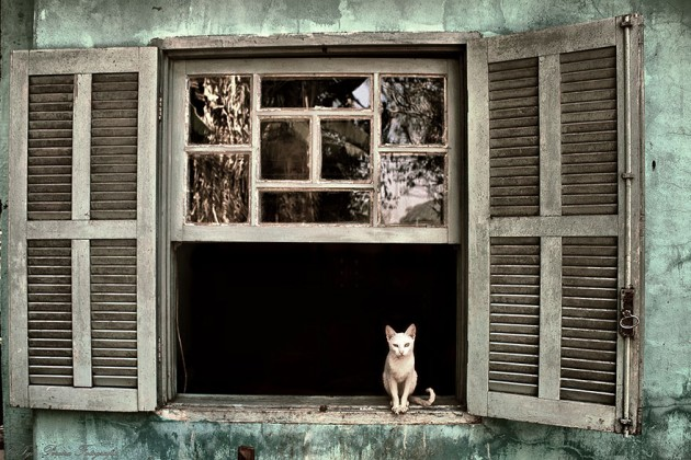 cat-waiting-window-34