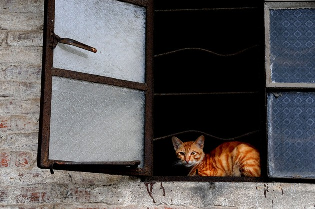 cat-waiting-window-38