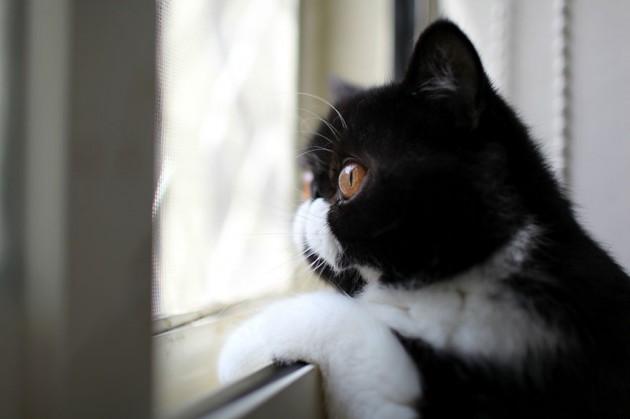cat-waiting-window-61