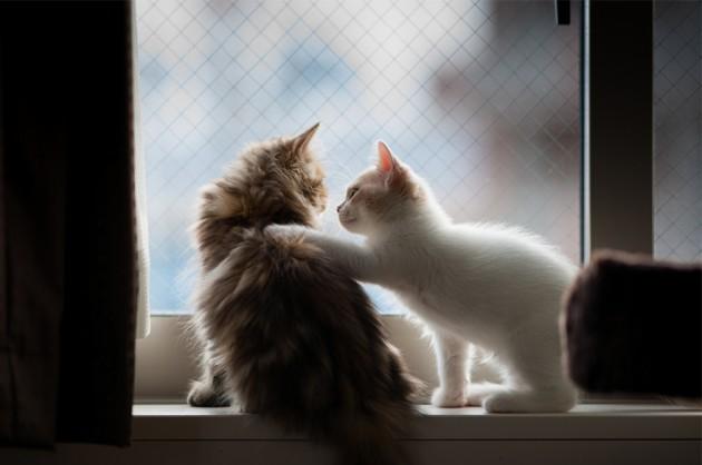 cat-waiting-window-68
