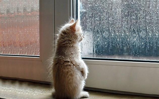 cat-waiting-window-69