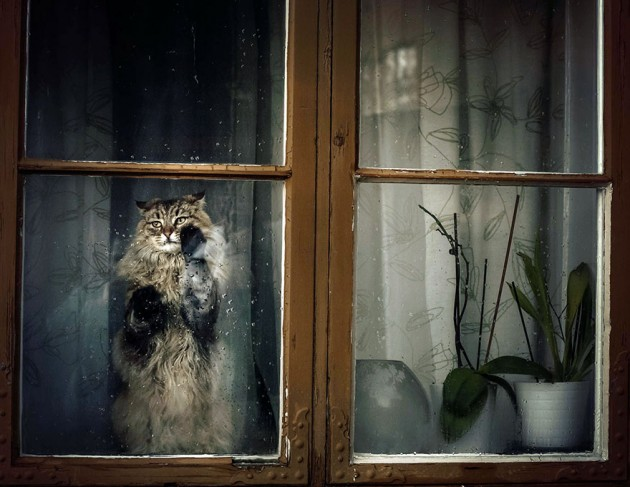 cat-waiting-window-7