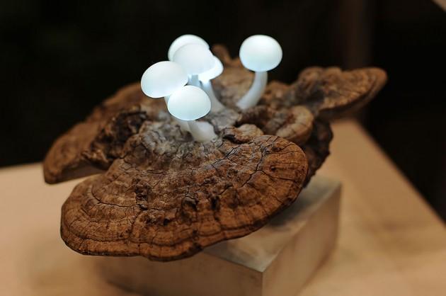 Lâmpadas de Cogumelos  em Led