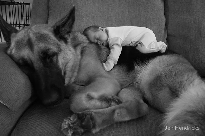cute-big-dogs-and-babies-1