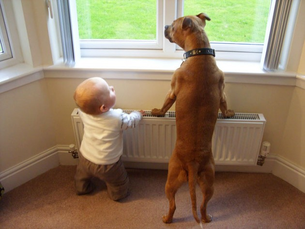 cute-big-dogs-and-babies-13
