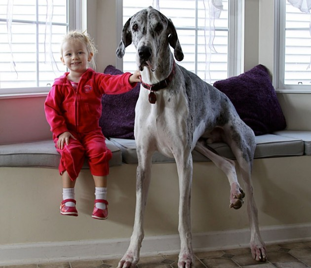 cute-big-dogs-and-babies-21