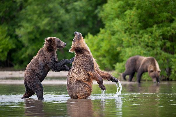 #20 - Empurram os Amigos Ursos no Rio