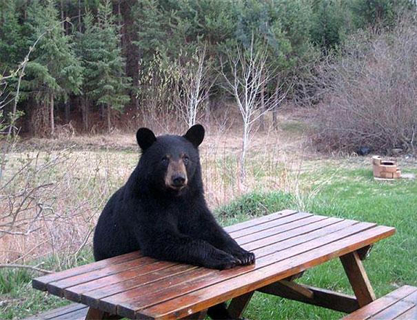 #17 - Esperam a Dona Ursa com o Almoço