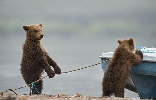 #25 - São Ursos Parceiros