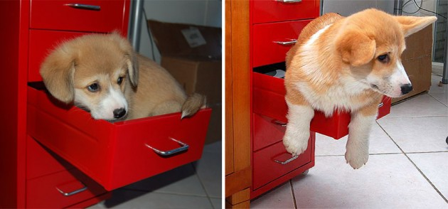 animals-before-after-then-now-42