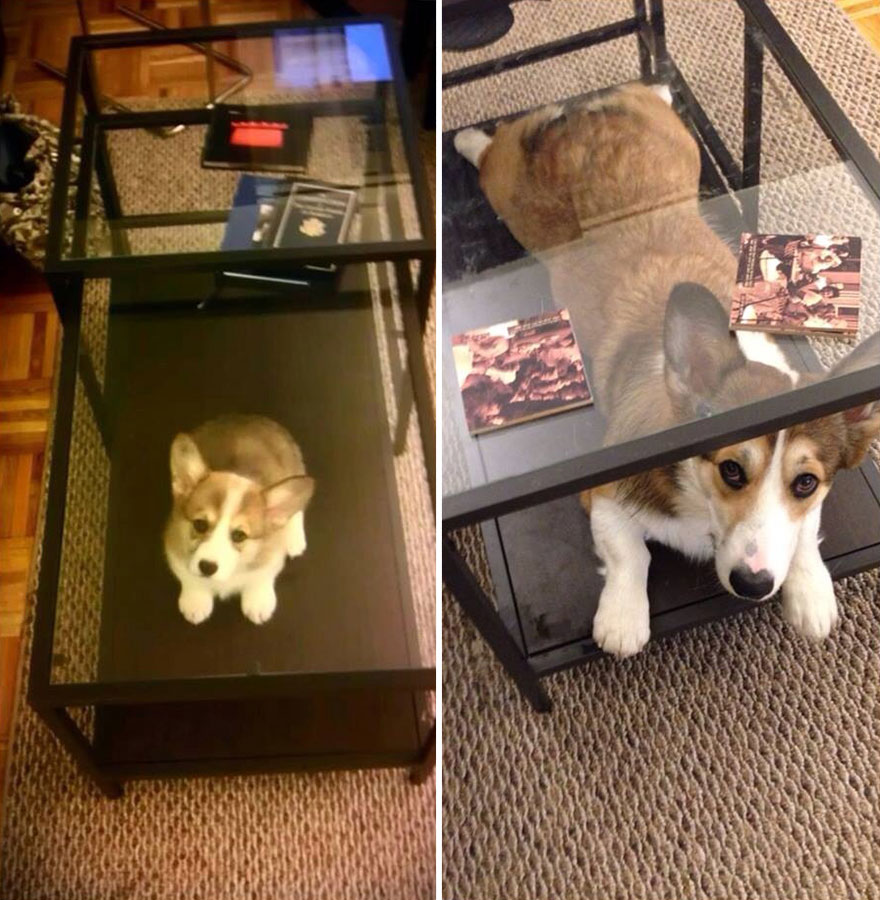 animals-before-after-then-now-50