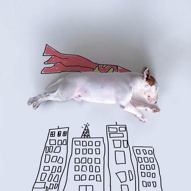 bull-terrier-ilustracoes2