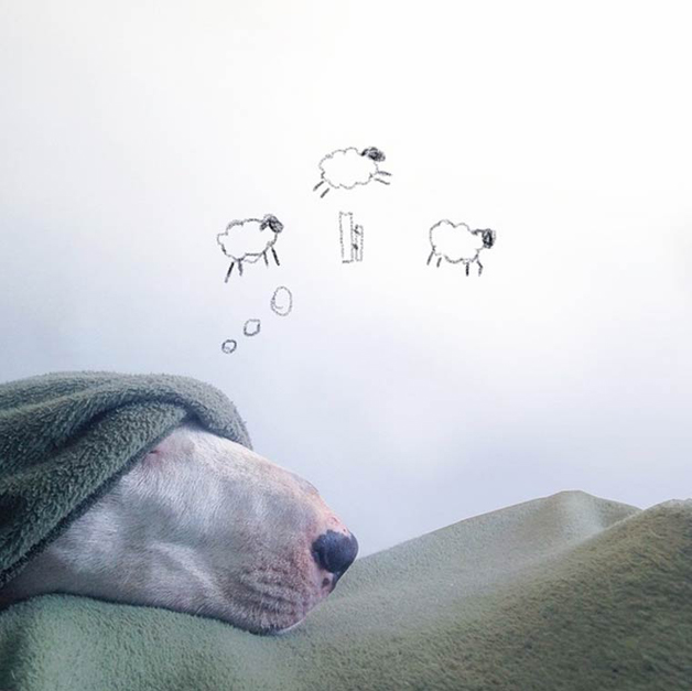 bull-terrier-ilustracoes8