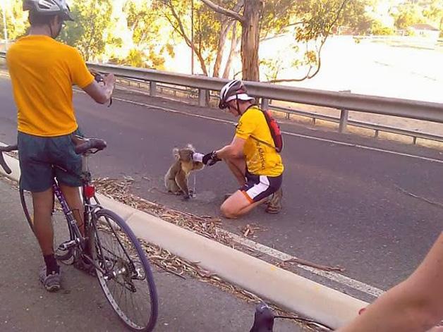3. Ciclistas pararam na estrada para dar água a um coala.