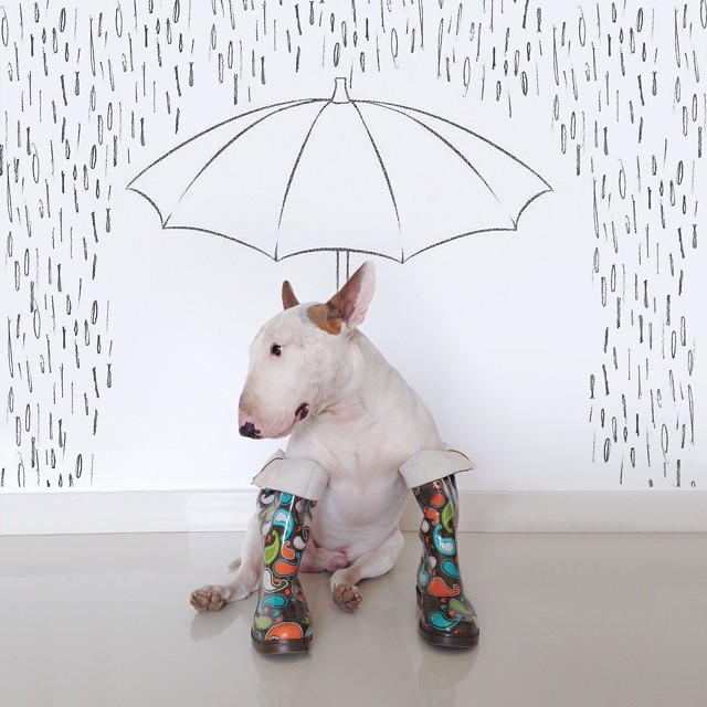 jimmy-choo-bull-terrier-illustrations-rafael-mantesso-10