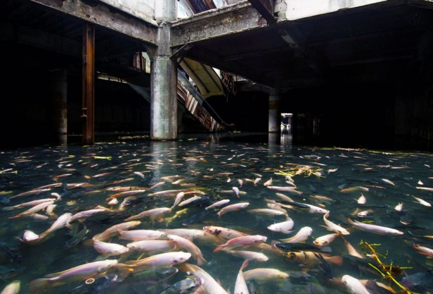 Shopping abandonado tomado por Peixes,  Bangkok