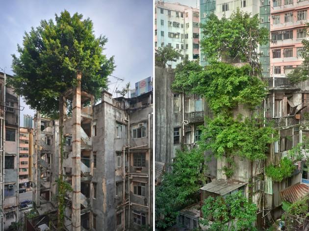 Árvore vs. Concreto, Hong Kong.