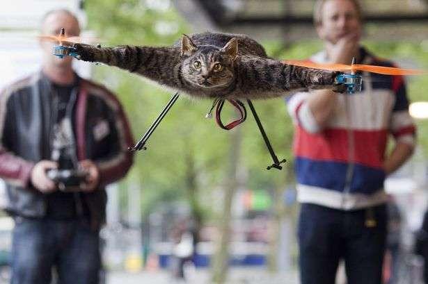 Em 2012, a dupla de inventores fez o gato voador