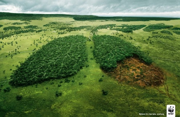 save-the-rain-forest