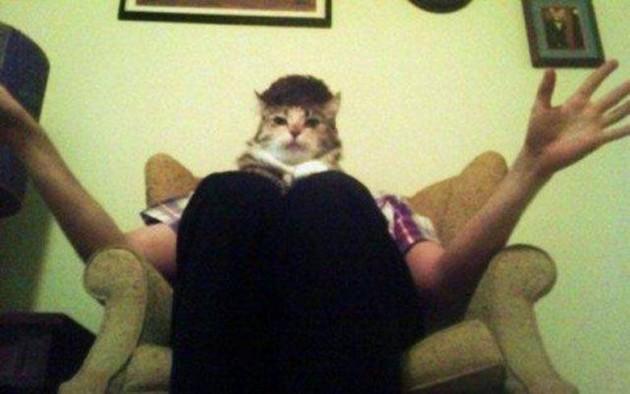 Gato humano?