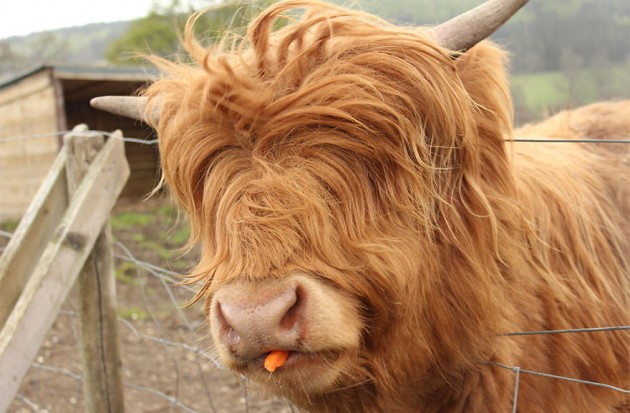 XX-Animals-That-Need-To-Get-A-Haircut-Real-Bad15__880