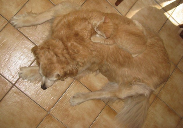 camouflage-animals-pets-funny-10__880