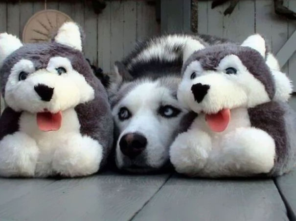 camouflage-animals-pets-funny-2__605