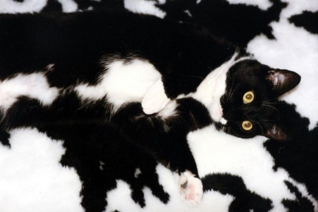 camouflage-animals-pets-funny-30__880