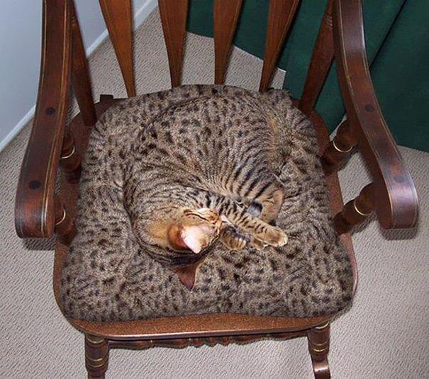 camouflage-animals-pets-funny-37__605