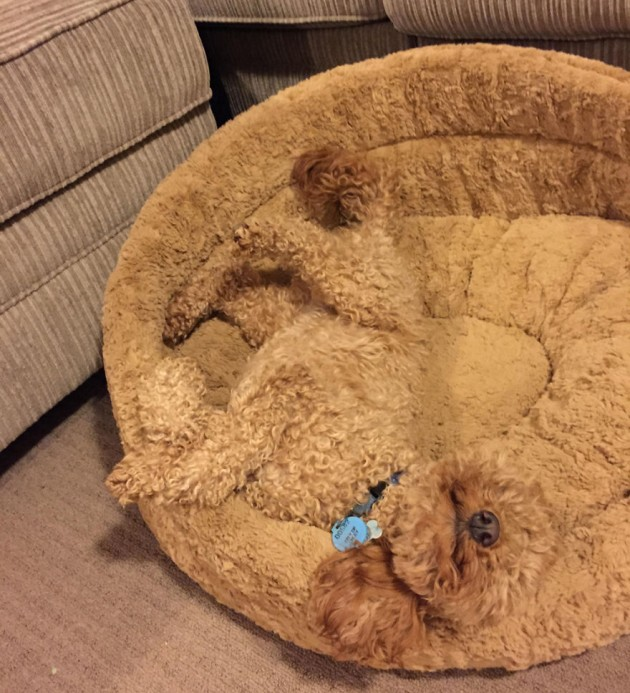 camouflage-animals-pets-funny-3__880
