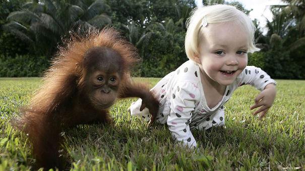 kids-act-like-animals-like-orangutan__605
