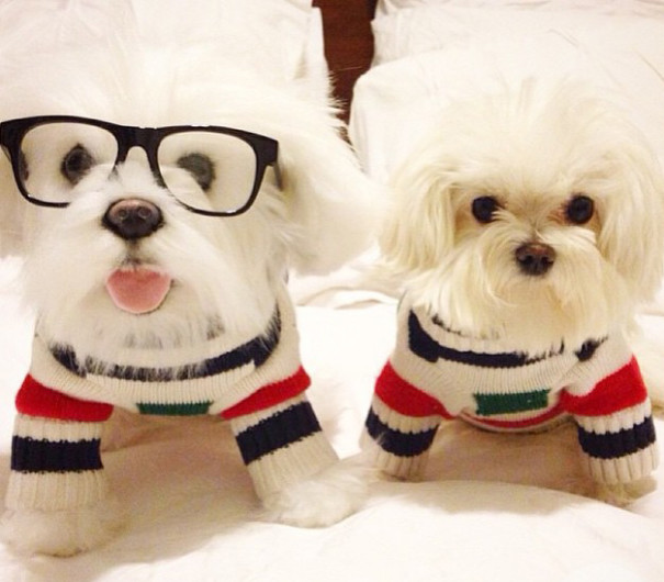 pet-copy-custom-plush-toys-cuddle-clones-16-605x530