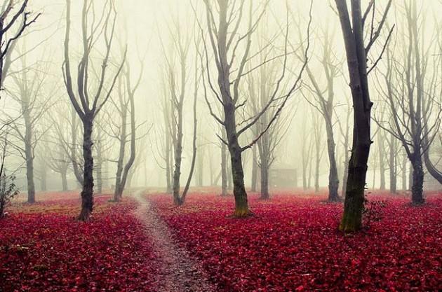 Forest Park - Italia.